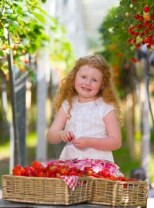 Picking up some Strawberries ahead of the Strawberry Festival in Enniscorthy, Co Wexford this weekend is Amelia Harrington age 4 at Wheelock's Fruit Farm, for festival details see visitwexford.ie – photograph Patrick Browne.